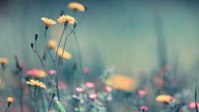 anh hoa dep1