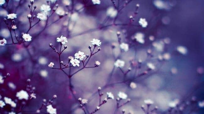 hoa dep 1